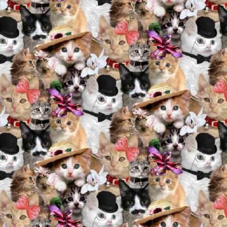 Kübaratega kassid trikotaaž